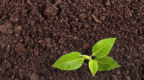 Плодородный грунт, почвогрунт или чернозем