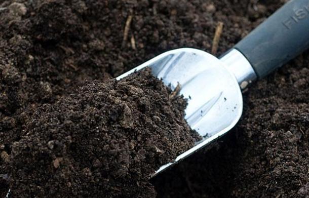 Состав и особенности почвогрунта