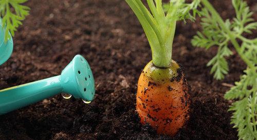 Купить грунт растительный плодородный